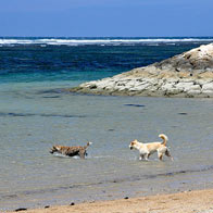 Photo of the Day: Dogs Playing in Kuta