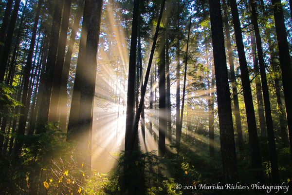 Lynn Canyon, Vancouver, Canada - © 2011 Mariska Richters Photography