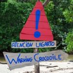 Warning Crocodile
