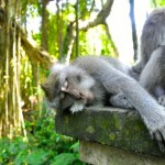 Monkey Forest in Ubud, Bali