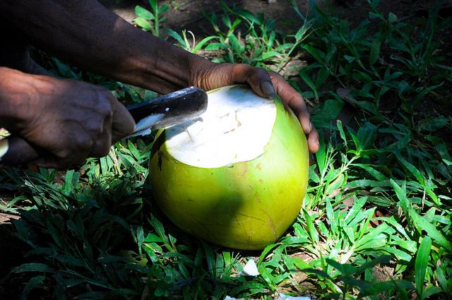 Fresh Bali Coconut