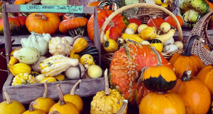Abby Lane Farm - Pumpkins