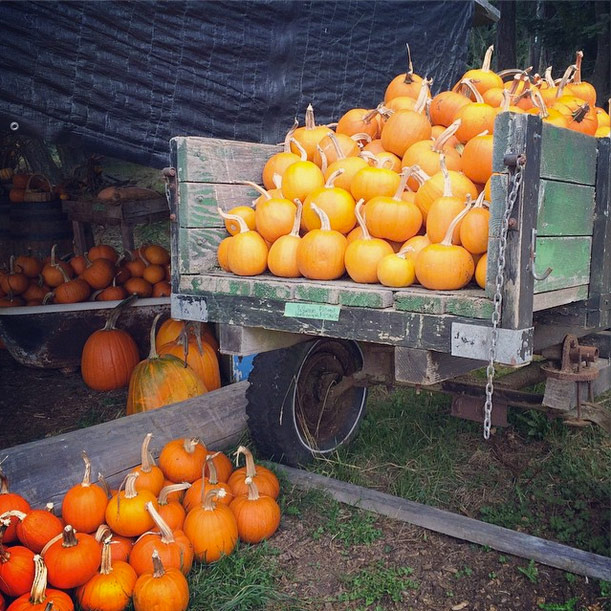Abby Lane Farm - Pumpkins