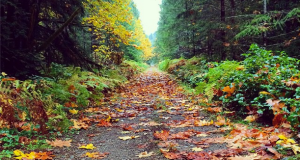 Cowichan River Provincial Park in the Fall