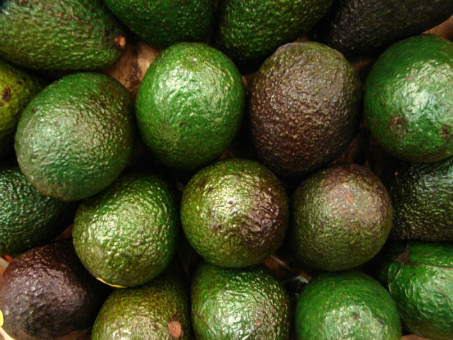 avocado selection