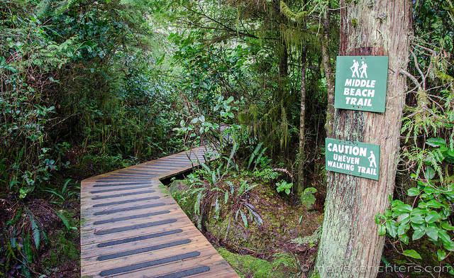 Trail to Middle Beach Tofino