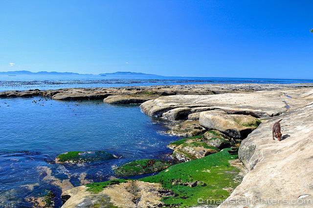 Botanical Beach on Vancouver Island