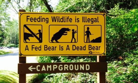 French Beach - Bear Sign
