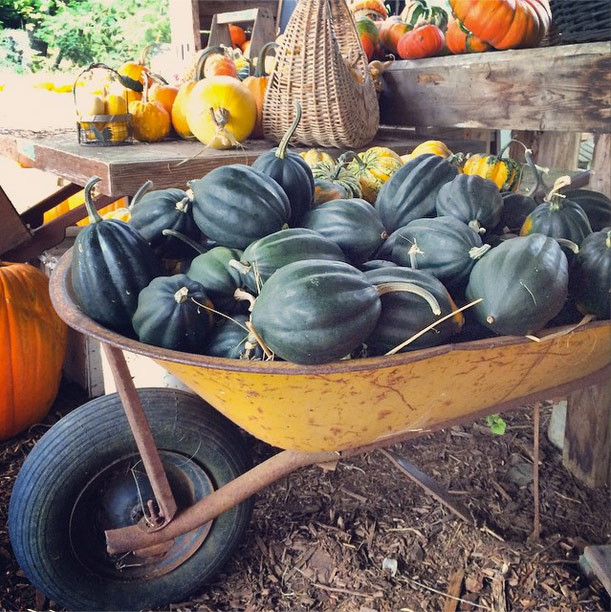 Abby Lane Farm - Squash